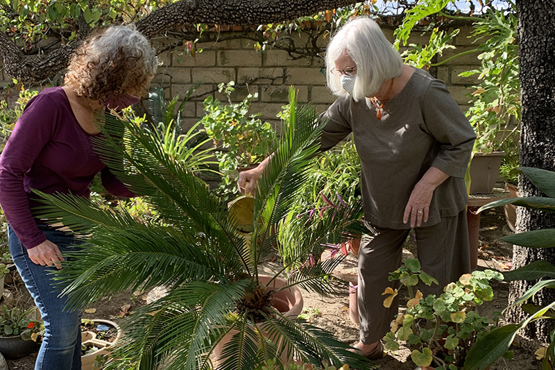 Connecting with Seniors - Gardening